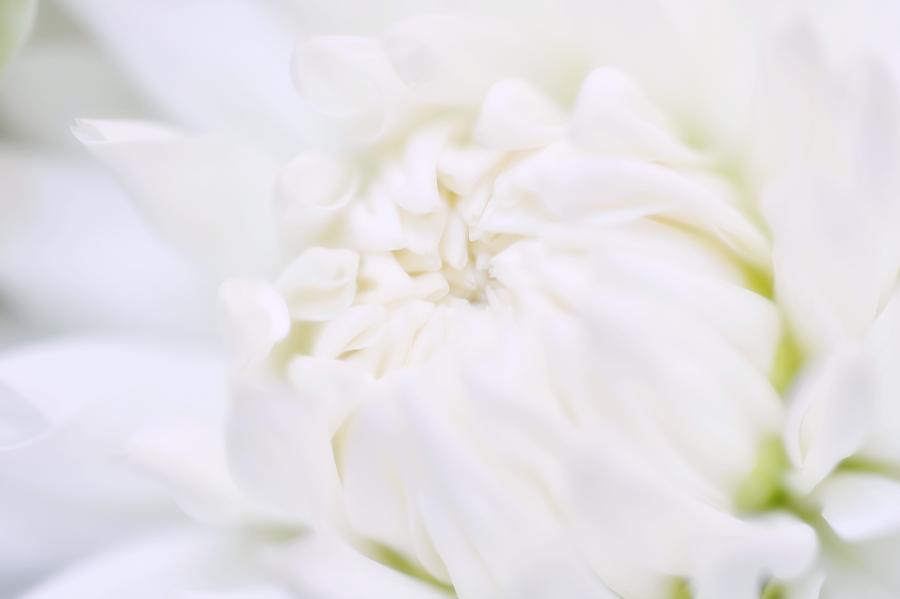 ROLEXコーナーを飾る美しい花(マクロのセカイ) - ROLEX